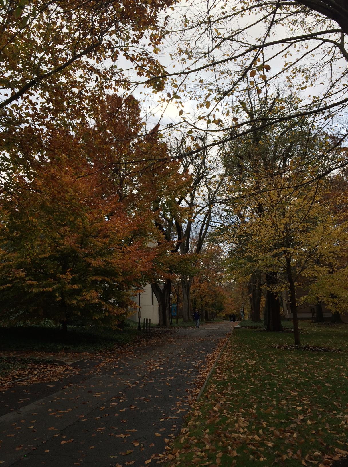 Princeton17