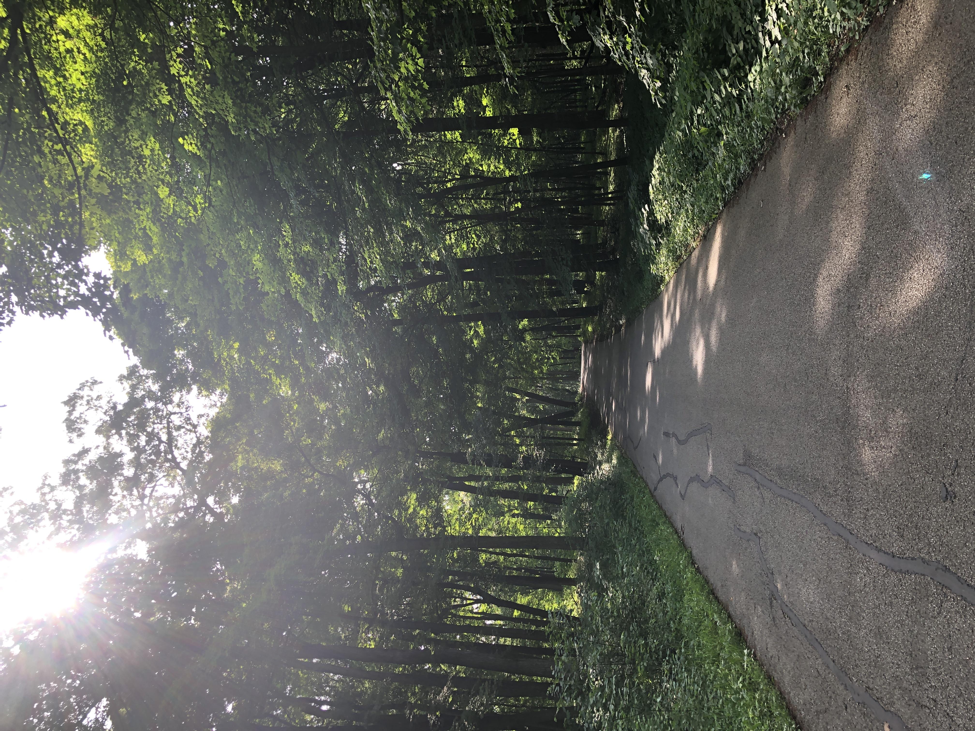 Morton Arboretum-11