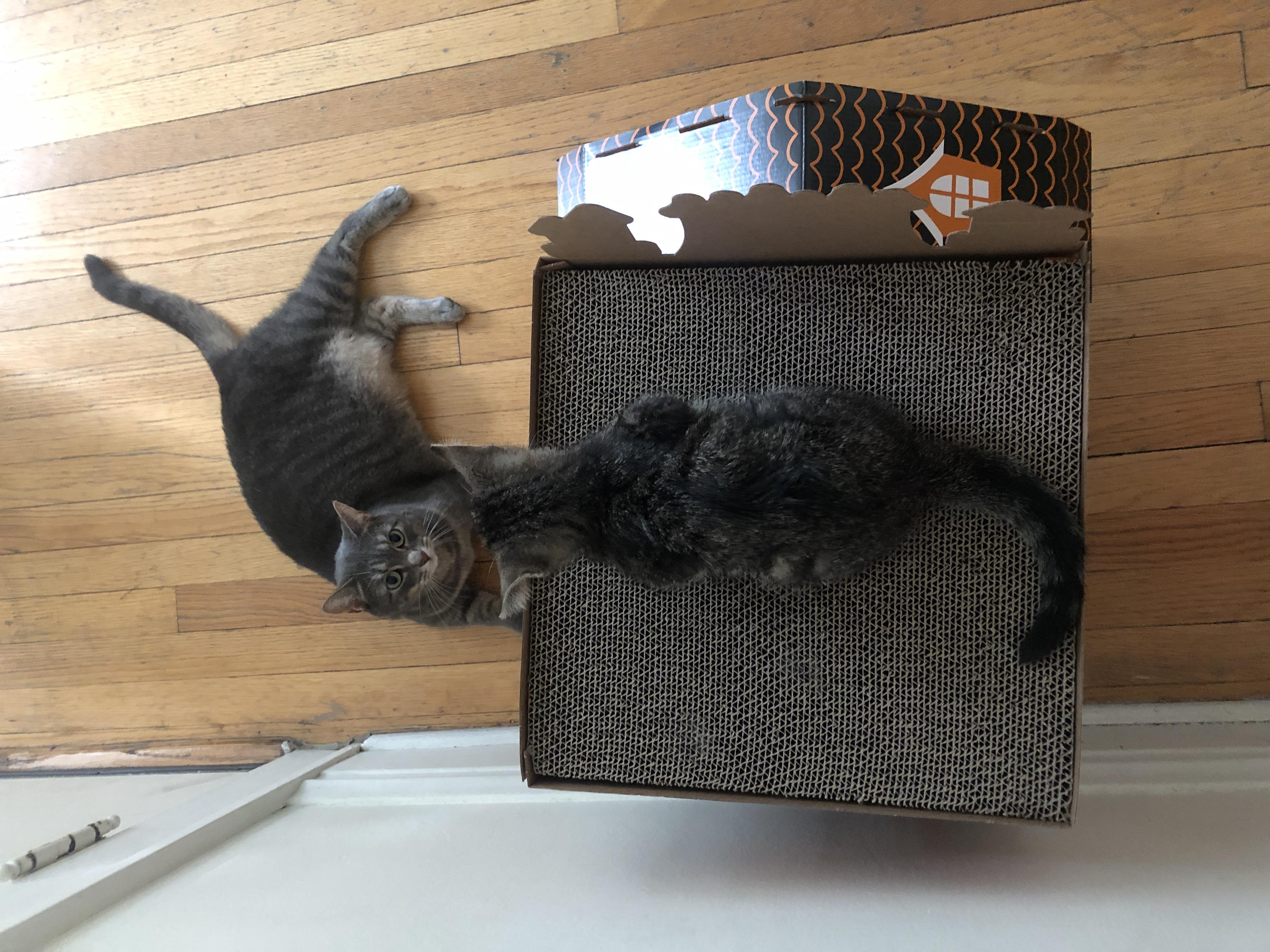 Kitten-3