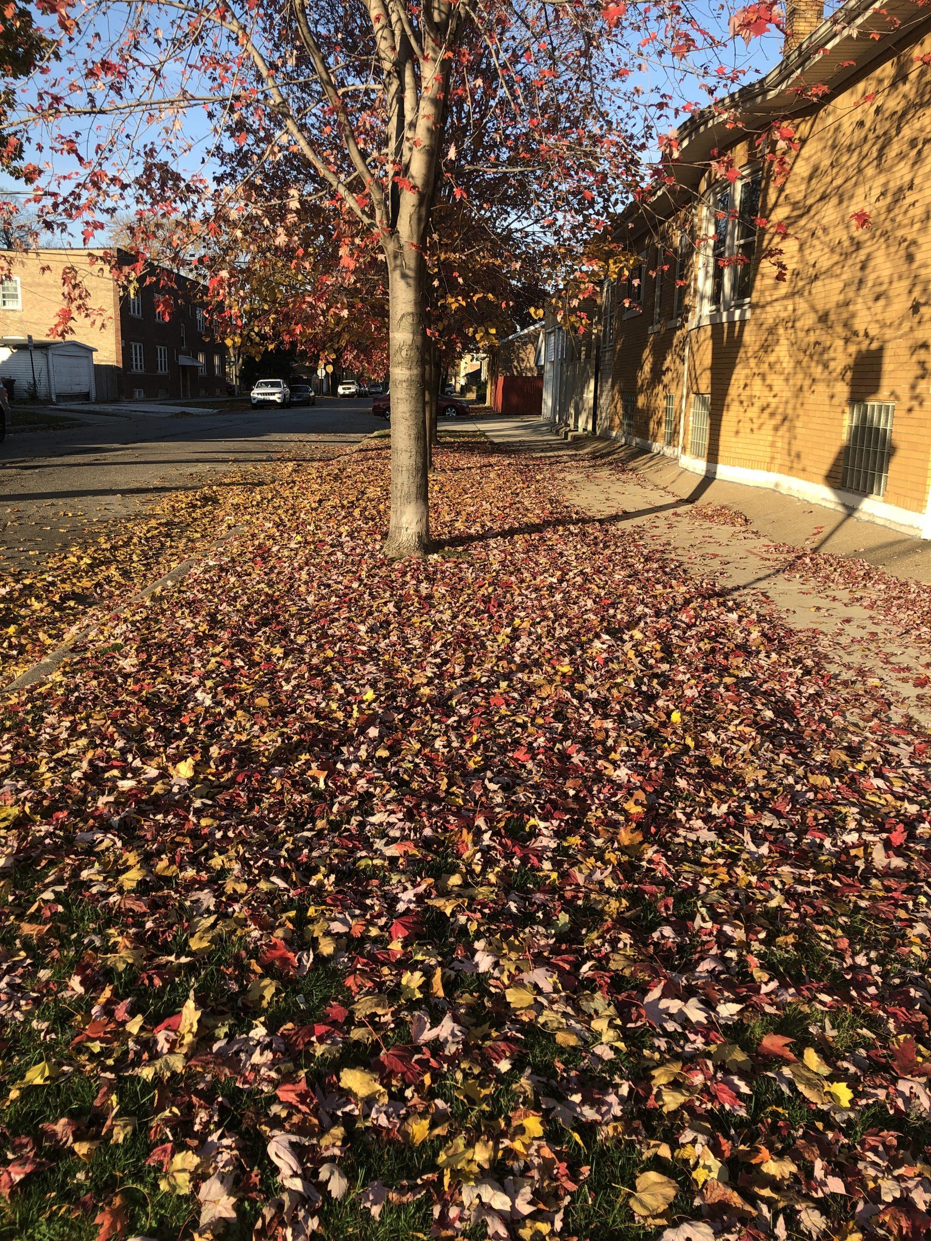Fall Weather-2